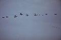 Royal Navy fly-past, Farnborough, September 1988. (5589948574).jpg