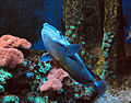Särkänniemi - fish 8.jpg