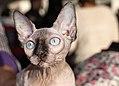SPH-котята (15490729750).jpg
