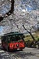 Sakura Blossom @ Namsan , Seoul - panoramio.jpg