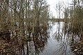 Salajõe karstiala Salajõe maastikukaitsealal kevadise suurvee ajal.jpg