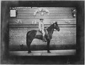San Francisco Earthquake of 1906, (Unidentified soldier on horseback) - NARA - 522966.tif
