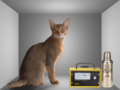Schrödinger cat.png