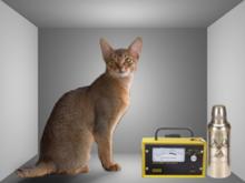 schrodinger cat costume  Visualisatie van het ...