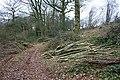 Seven, Eight, Lay them straight - Broxash Wood - geograph.org.uk - 1345266.jpg