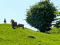 Sheep on the hillside - geograph.org.uk - 1304019.jpg