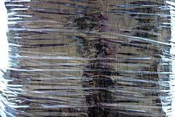 Shrink-wrapped tree - Boston, MA - DSC02652.JPG