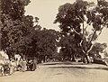 Shubra Avenue by Boston Public Library (cropped).jpg