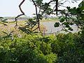 Sicao Lake 四草湖 - panoramio.jpg