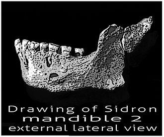 Sidrón Cave - Sidron mandible