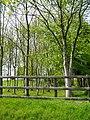 Silver Birches - geograph.org.uk - 175231.jpg