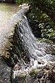 Silver River - geograph.org.uk - 1357600.jpg