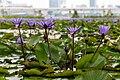Singapore (SG), ArtScience Museum, Water Lilies -- 2019 -- 4538.jpg