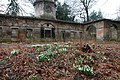 Snowdrops at Cammo Stables - geograph.org.uk - 1725160.jpg