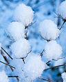 Snowers (8387063736).jpg