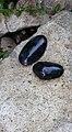 Some shiny rocks near the fountain (26240116873).jpg