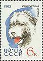 South-Russian-Sheepdog-Canis-lupus-familiaris.jpg