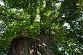 Spannberg, Linden am Quent, GF-075 (22).jpg