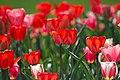 Spring Tulips (Unsplash).jpg
