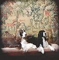 Springer spaniels with tapestry background.jpg