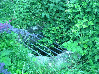 Lodsworth - St Peter's Well in 2007