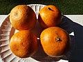 Starr-131204-2665-Citrus reticulata-Clementine fruit-Hawea Pl Olinda-Maui (25228268275).jpg