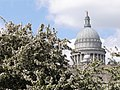State House with Spring Blossoms - Providence - RI - USA (7099672467).jpg