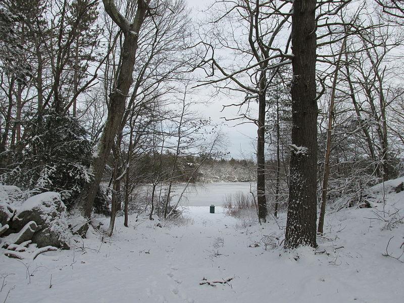 File:Stearns Pond, Harold Parker State Forest, North Andover MA.jpg
