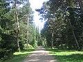 Stepanavan Dendropark path.jpg