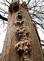 Strange dead tree - geograph.org.uk - 1076582.jpg