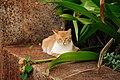 Stray Cat @ Kakaako Park (5607457365).jpg