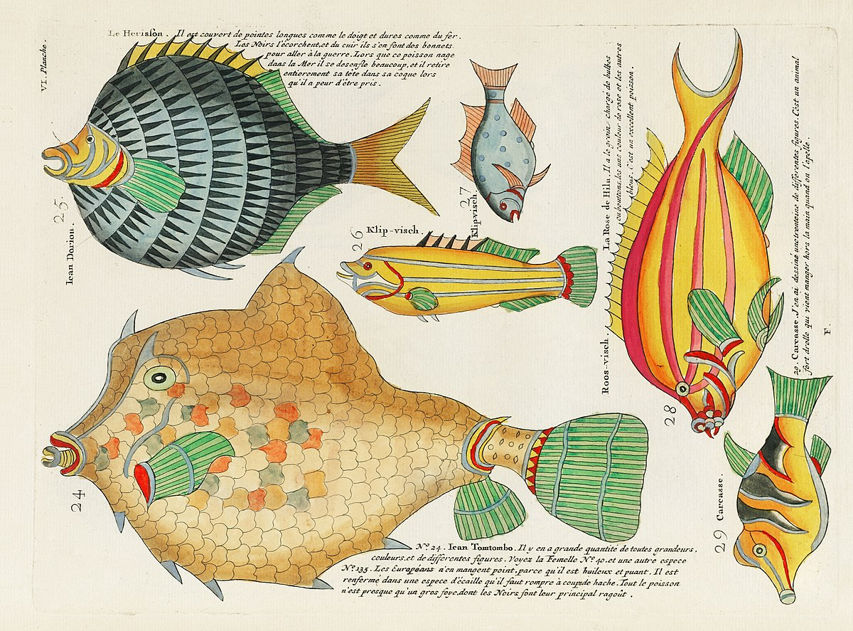 D Ou Vient Le Cuir file:surreal illustration of fishes and crabs found in