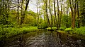 Surzhitsa creek (Moscow region, Antsiferovo vil.).jpg