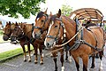Switzerland-03665 - Farm Visit (24087240012).jpg