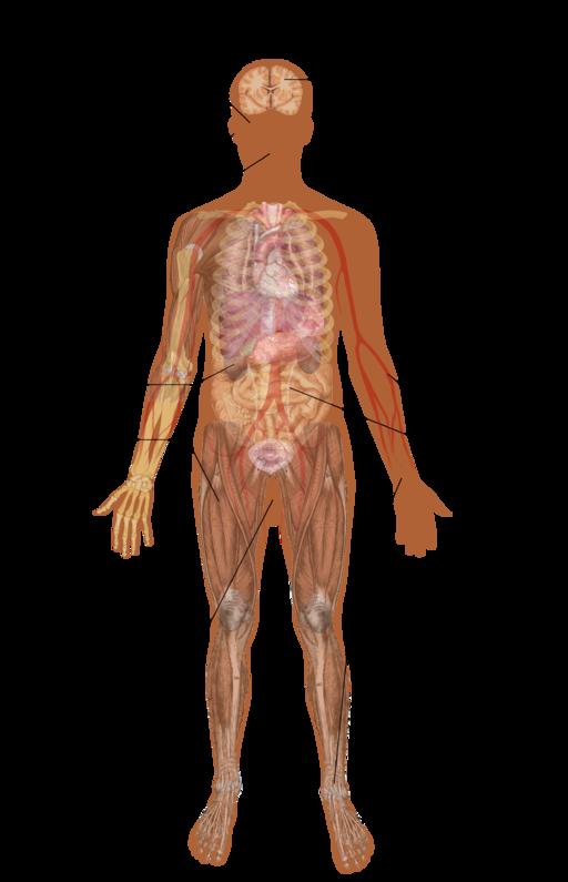 Symptoms of lead poisoning (raster)