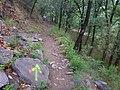 TNF100越野跑赛道 - TNF100 Ultra Trail Track - 2014.05 - panoramio (1).jpg