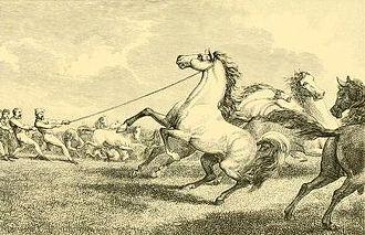Samuel Howitt - Taking wild horses on the plains of Moldavia (wood engraving after Howitt))