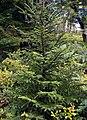 Tamarack Swamp (1) (9463190332).jpg
