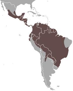 Répartition géographique du Tayra