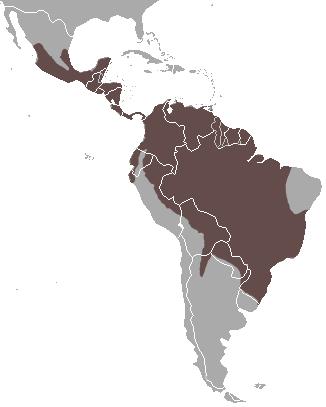 Tayra area
