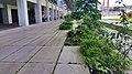 Tegel eruit, groen erin, Strijp-S, Eindhoven (48023628573).jpg