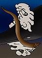 Tethymyxine tapirostrum.jpg
