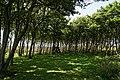 Texel - Bollekamer - View WNW II.jpg