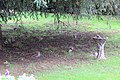 The Magnificent Seven Squirrels - November 2009 (4143939333).jpg
