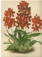 The Orchid Album-01-0017-0004.png