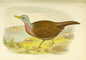 Description de l'image The birds of Australia (16769508186).jpg.