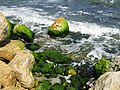 The green rocks - panoramio.jpg