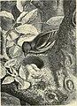 Thiere der Heimath - Deutschlands Säugethiere und Vögel (1882) (14770018433).jpg