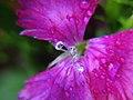 Tiny Drops (1203587007).jpg