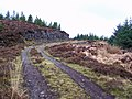 Track in Greshornish forest - geograph.org.uk - 1712778.jpg